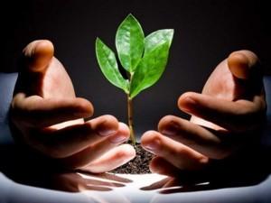 Уход за растениями